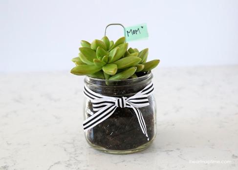 succulant-gift-idea
